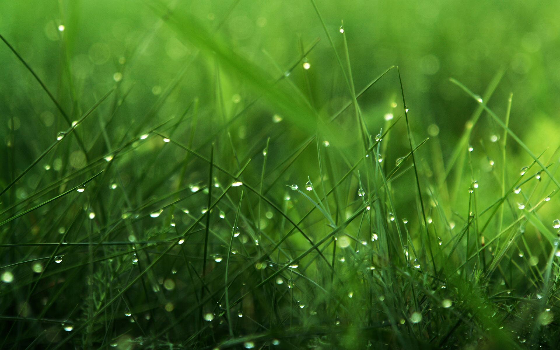 Beautiful-Grass-Nature-Wallpaper